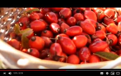 Utilizzo delle bacche della rosa canina in pasticceria: il nostro video